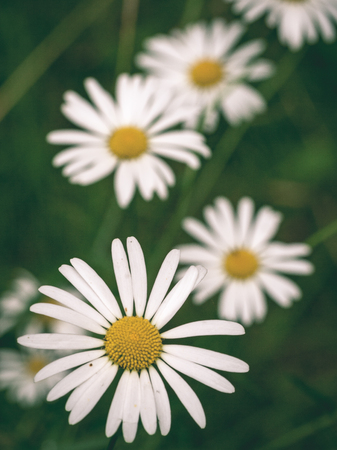 closeup of beautiful colored flowers with blur background nature - vintage green look Stock Photo