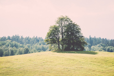 lonely tree far in the yellow field - retro, vintage style look Stock Photo