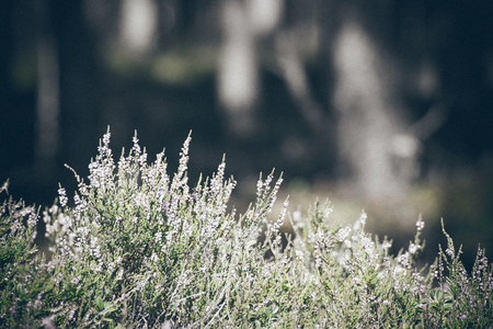 Autumn heather with bokeh blurred. Vintage effect. Retro grainy color film look.