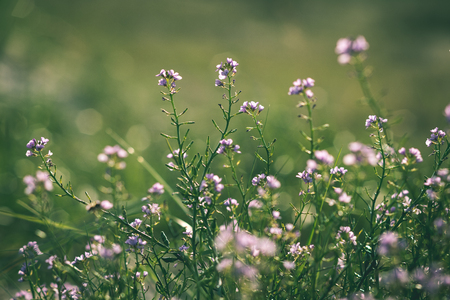 closeup of beautiful green plants with blur background nature - vintage green look