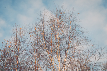 misty tree branches in bright sunlight in countyside - retro, vintage style look Reklamní fotografie