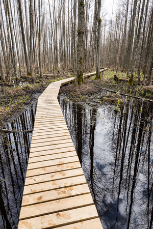 wooden footbridge in the bog in the countryside surrounded by forest