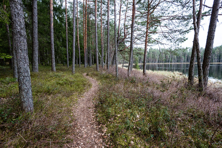 scenic and beautiful tourism gravel roud in the forest surrounded by trees