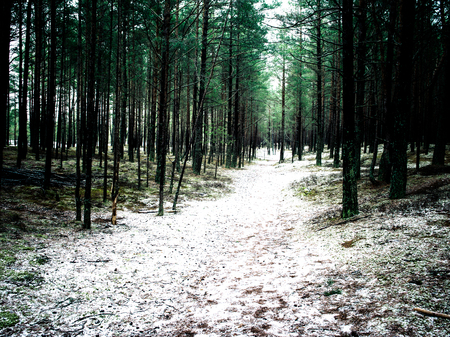 trail in the pine tree forest in winter with frost and snow - instant vintage film effect Stock Photo