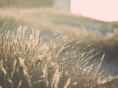 beautiful abstract grass texture on sunset with reflections and rays of sun - vintage retro grainy film effect Stock Photo