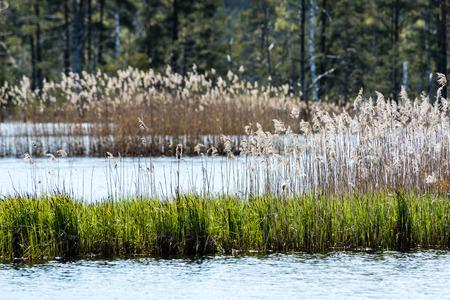 nesting: birds nesting and flyingover the lake in sunrise colors