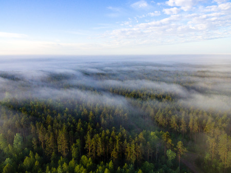 cleared: drone image. aerial view of morning mist over green forest in summer with sunrise and rays of light Stock Photo