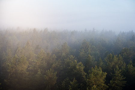 miraculous: panoramic view of misty forest at majestic sunrise over trees. far horizon with light rays and lens flare effect Stock Photo