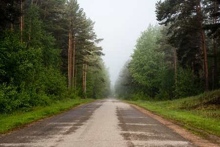 empty road in the countryside with forest in surrounding. perspective in summer with mist and green trees