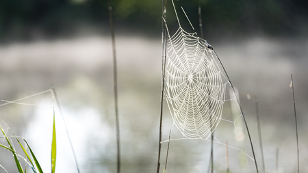 Beautiful spiderweb with dew drops in summer meadow after the rain with neutral background