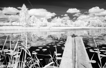 midday: forest lake with water grass and old wooden boardwalk in hot summer day. infrared image