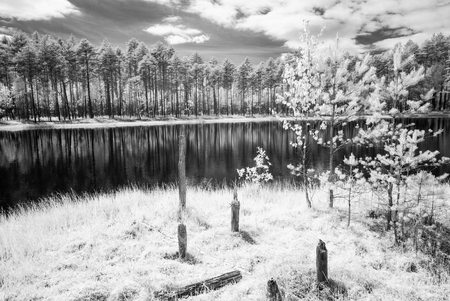 forest lake in hot summer day in countryside. infrared image