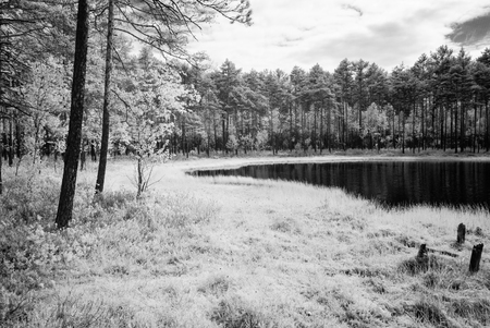 midday: forest lake in hot summer day in countryside. infrared image