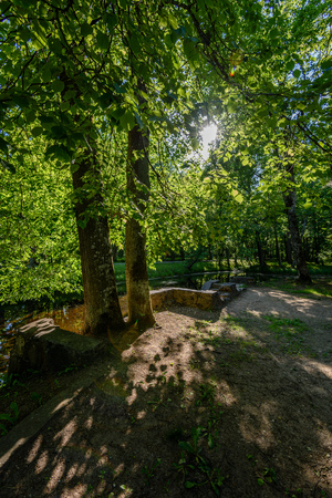 radiance: green forest with tree trunks and light rays, shadows in summer Stock Photo