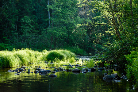 river: beautyful morning light over forest river of Amata, Cesis, Latvia. sandstone cliffs and green vegetation around water in summer Stock Photo