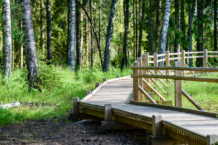 surrounded: wooden footbridge in the forest in the countryside surrounded by green foliage
