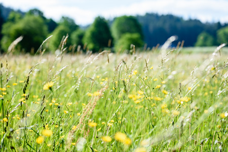 midsummer countryside meadow with flowers. abstract close up neutral background. white and yellow plants blooming