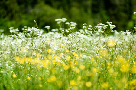 sepals: midsummer countryside meadow with flowers. abstract close up neutral background. white and yellow plants blooming