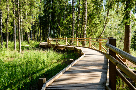 wooden footbridge in the forest in the countryside surrounded by green foliage