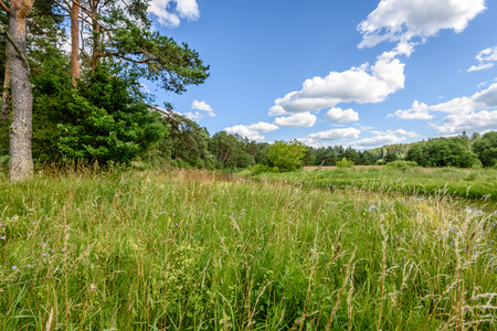 sunny meadow with flowers and green grass in summer at countryside and clouds above