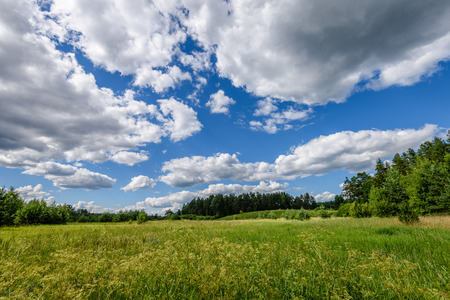 arando: sunny meadow with flowers and green grass in summer at countryside and clouds above