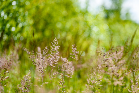 spring flowers on green background with shallow depth of field