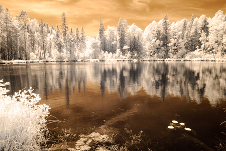 forest by the lake in hot summer day. tree leaves and reflections in water. infrared colored image