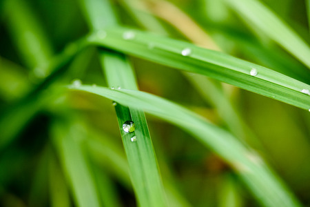 grass with dew drops on green background with shallow depth of field Stock Photo
