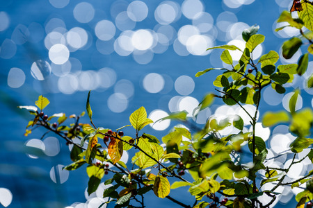 green leaves on a bed of sparkling blue water with background blur rings and bokeh