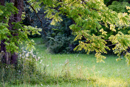 abstract summer forest with sun and green tree lush. textures