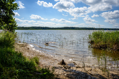 latvia: overcast day by the lake with water grass and blur background Stock Photo