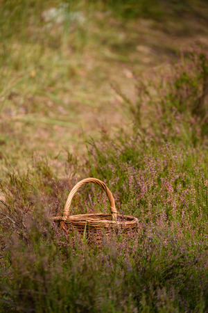 beautiful wooden woven basket in front of forest heatherwith blur background and copy space in autumn