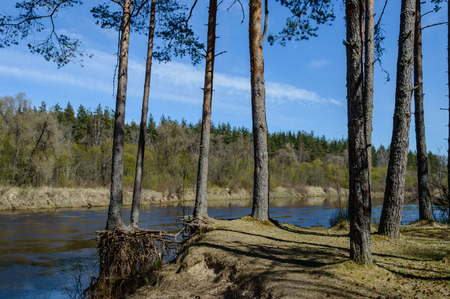 scenic wetlands with country lake or river in summer. reflections in water with forest and grassland Stock Photo