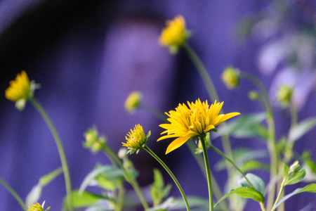 summer flowers on green background in sun lit meadow in front of plant textures Stock Photo