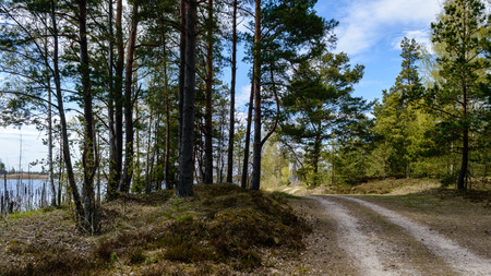 empty road in the countryside with trees in surrounding. perspective in summer. gravel surface in latvia Stock Photo