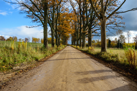 empty drive way in the countryside with trees in surrounding. perspective in autumn. gravel surface in latvia with valley of trees on both sides of the road