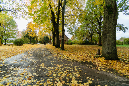 empty road in the countryside with trees in surrounding. perspective in autumn. gravel surface in latvia