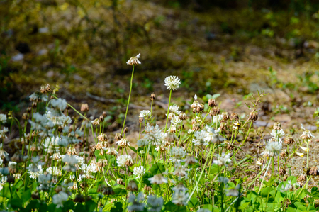nature details in forest in summer. nature in latvia Stock Photo