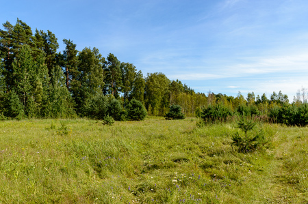 empty colorful meadows in countryside with flowers in foreground. nature in latvia 스톡 콘텐츠