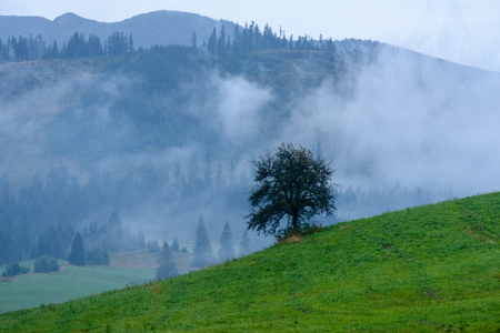western carpathian mountain tops in  autumn covered in mist or clouds. panoramic view from a distance. autumn colored forests 스톡 콘텐츠