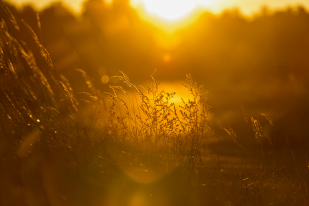 autumn grass bents against dark background in warm day in sunset light. countryside. golden sun