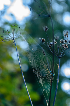 autumn grass bents against dark background in warm day with spider webs. countryside Stock Photo