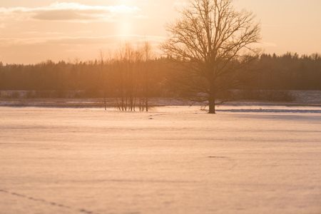 colorful winter sunset with light rays coming through the large tree branches on the frozen meadow in country