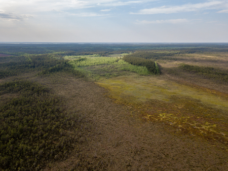 drone image. aerial view of swamp area with foot walk trails. latvia