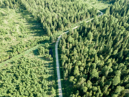 drone image. gravel road surrounded by pine forest from above. summer countryside in Latvia 版權商用圖片