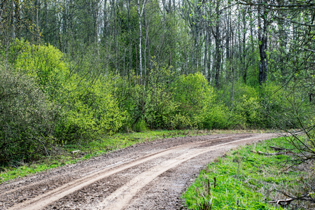 empty gravel road with tracks of mud in the countryside in summer heat perspective in forest 写真素材