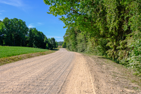 empty gravel road with tracks of mud in the countryside in summer heat perspective in forest 免版税图像