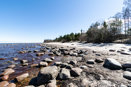 rocky beach in the baltic sea with trees and skyline