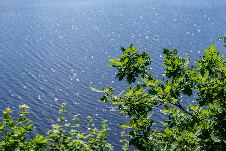 sparkling natural round flares reflections in water with green tree leaves in foreground. summer day