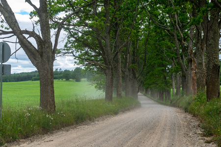 simple country gravel road in summer at countryside with trees around and clouds in the sky 스톡 콘텐츠